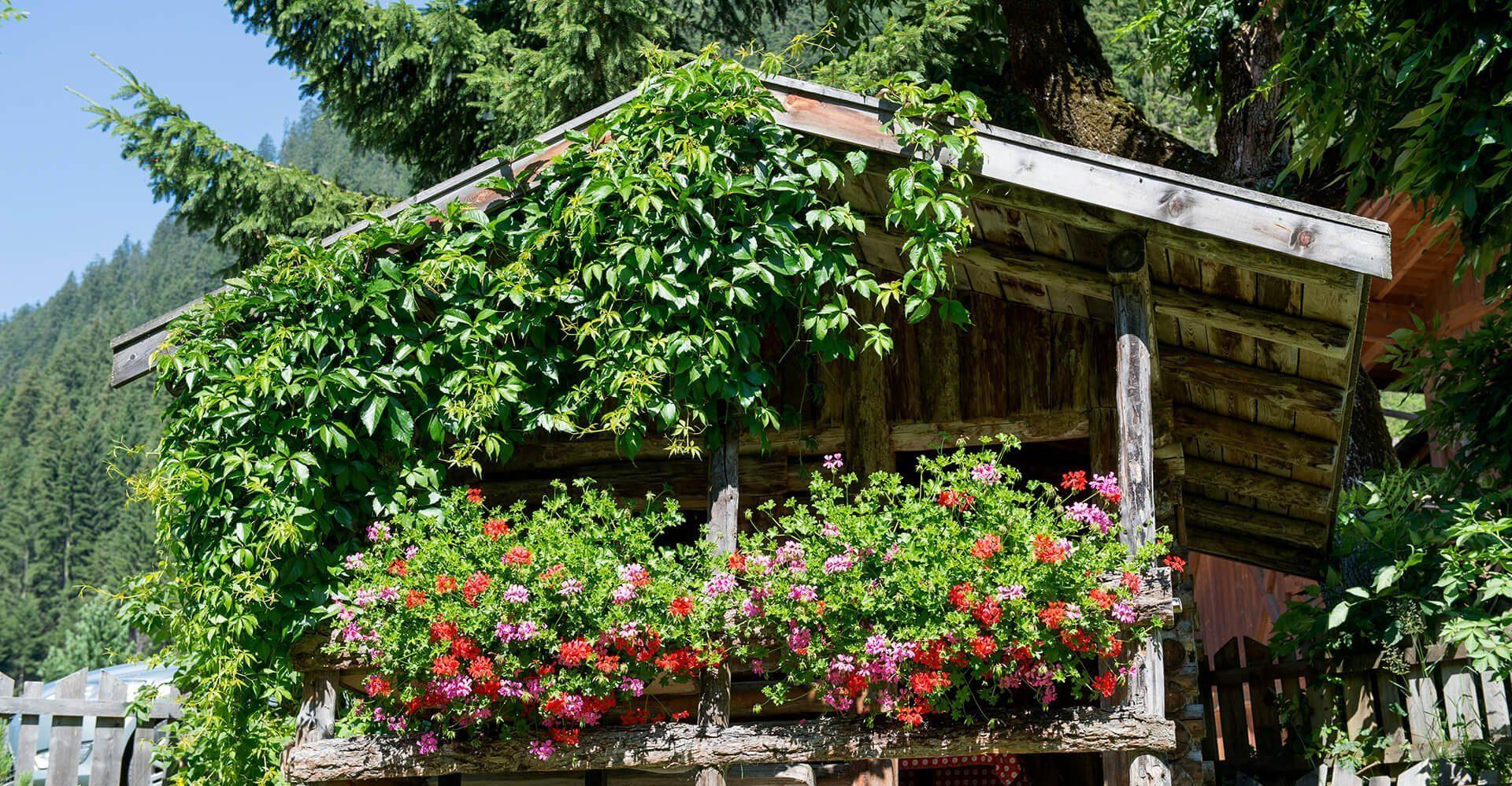 Bepflanzte Hütte