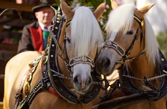 Eventi cittadini con carrozza trainata da cavalli